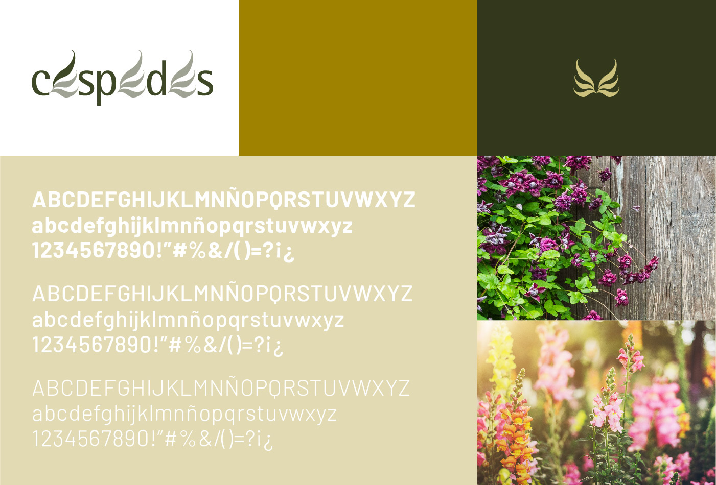 graphic design web cespedes